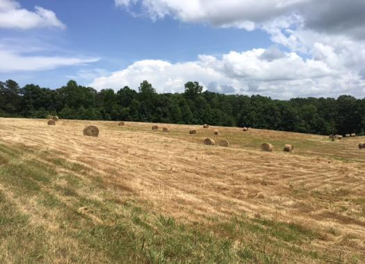 Pasture Land For Sale in West Georgia and East Alabama